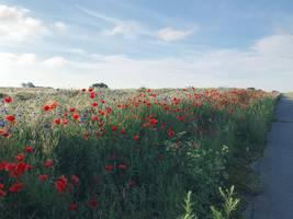 kornblumenfeld am radweg nach upahl heinz erich karallus ©Heinz Erich Karallus