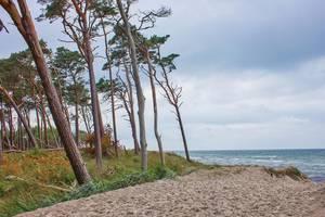 windflüchter manfred kumbier ©Manfred Kumbier