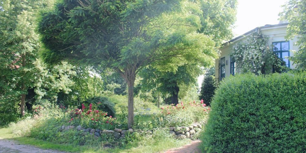 Baum und Hecke