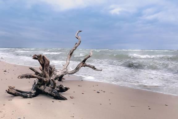 strandgut holger schulz ©Holger Schulz