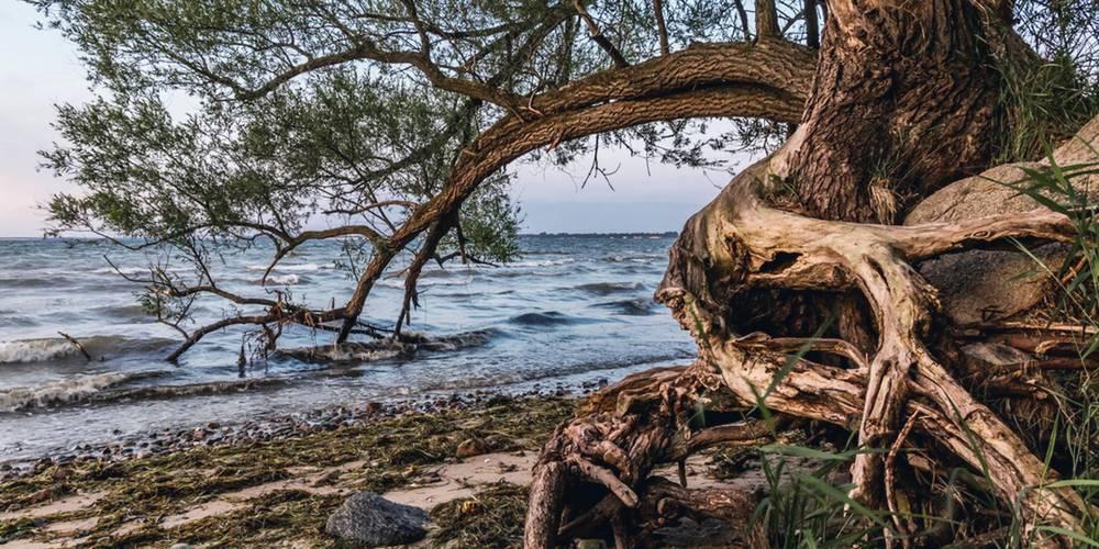 unsere küstenbäume haben es schwer helmut strauß ©Helmut Strauß